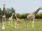 top 25 des sites à visiter en famille- gîte O naturel