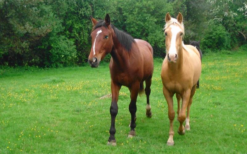 ferme-equestre-tertres©orne-tourisme.com